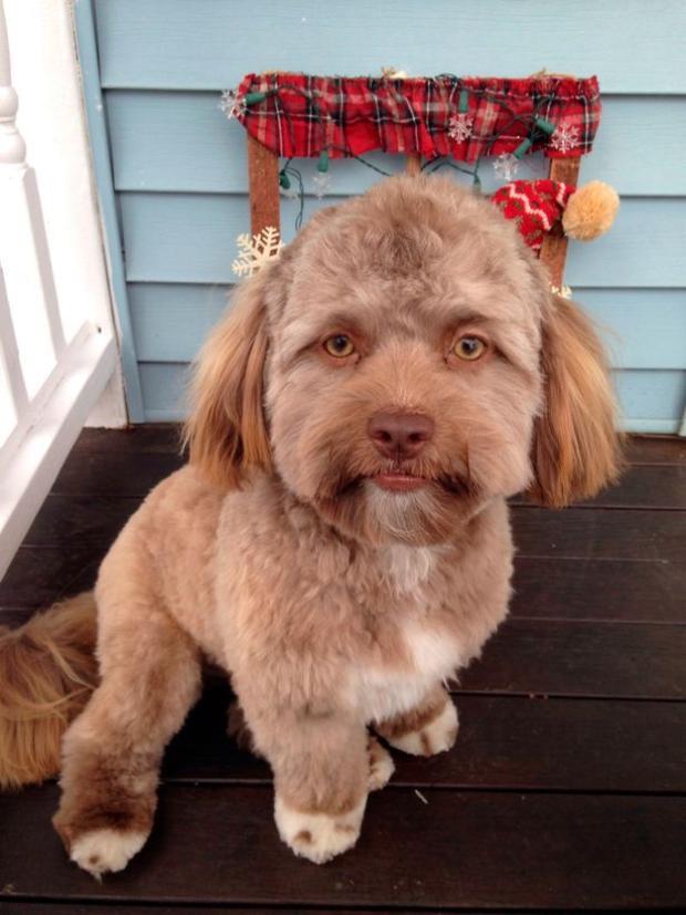 Chú chó Yogi có khuôn mặt giống hệt con người.