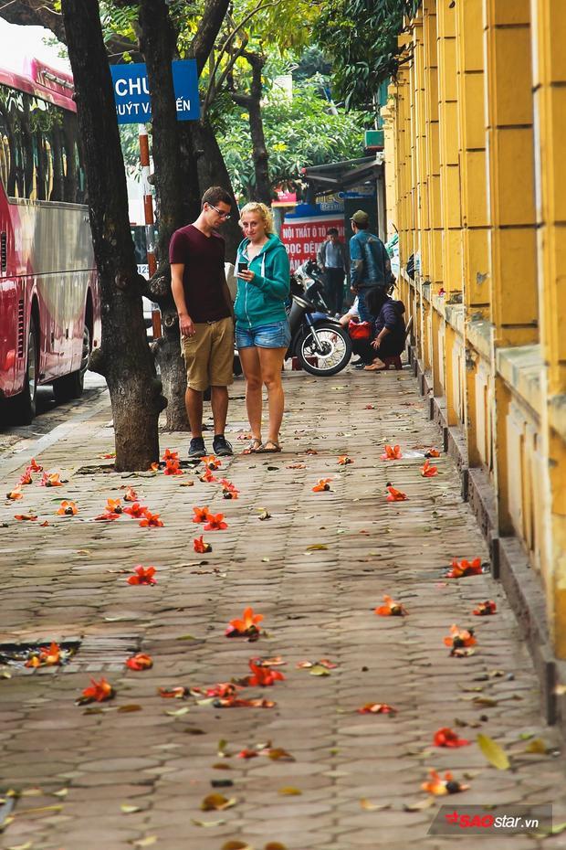 Xác hoa gạo rụng đầy lối đi khiến nhiều du khách đi qua thích thú dừng lại chụp ảnh.