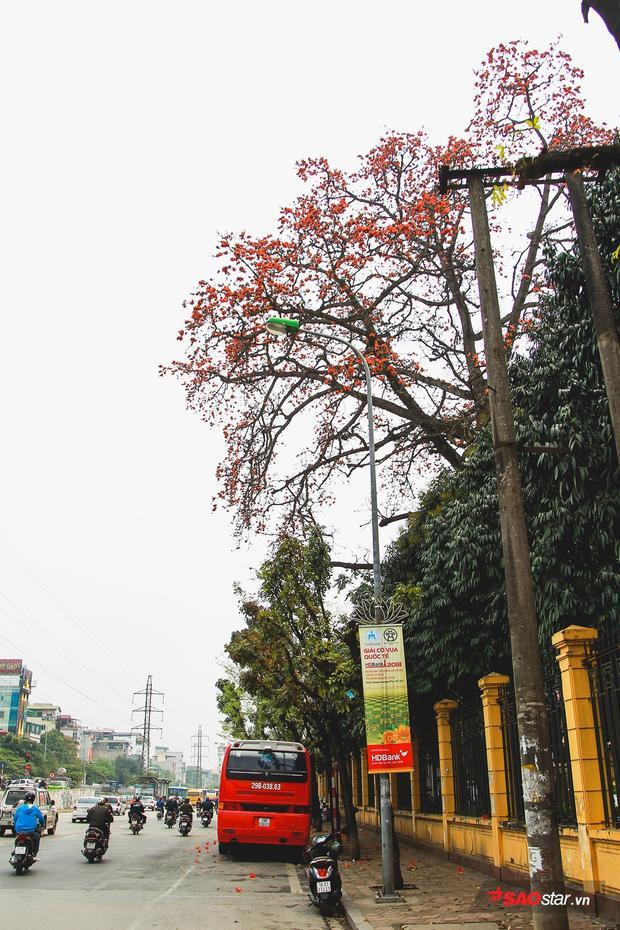 Khi hoa gạo nở là những đợt rét cuối cùng của mùa đông sắp qua, mùa hè sắp đến. Vì thế, màu hoa tuy đỏ chói lọi nhưng lại thường gắn với những bài thơ, bài ca và truyện kể rất nhiều nỗi buồn miên man.
