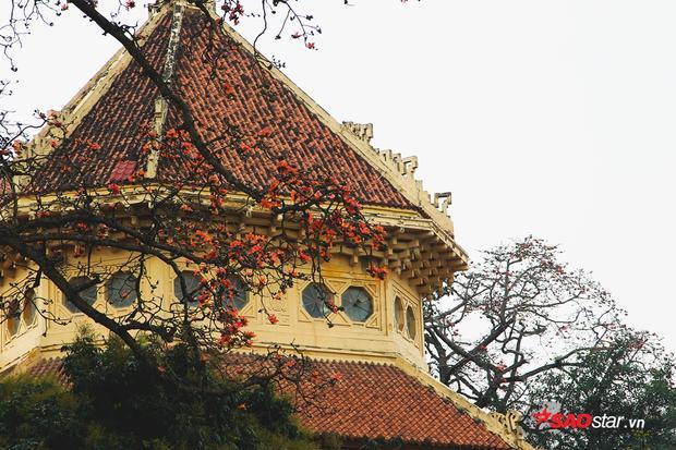 Hoa gạo phủ lên một nóc nhà, tạo nên phố cảnh đẹp đẽ ở Hà Nội.