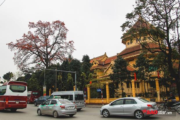 Cây gạo nở hoa rực rỡ trên phố Tràng Thi.