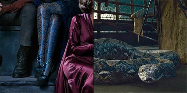 Fantastic Beasts 2: Giả thuyết về nguồn gốc của Nagini, thú cưng của chúa tể Voldemort
