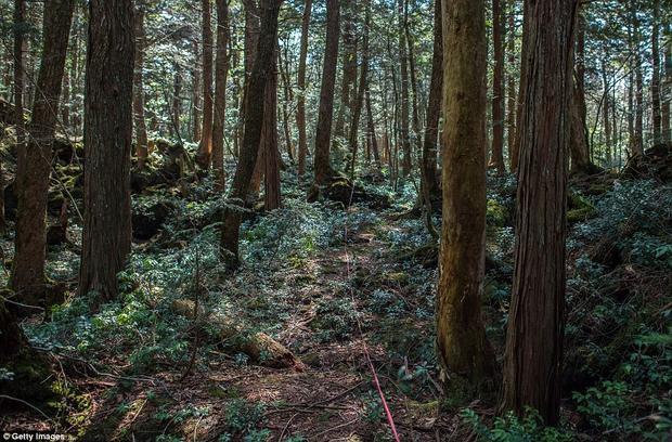Khu rừngAokigahara trở thành nơi những người bị trầm cảm tìm đến để kết thúc cuộc sống trong tuyệt vọng và đau khổ.