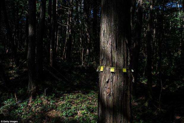 Một số người có vẻ vẫn còn do dự với quyết định tự sát, họ buộc những dải ruy băng vào thân cây để đánh dấu đường về.