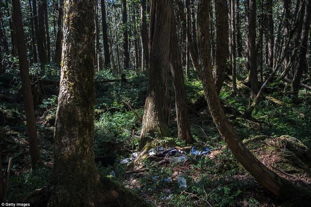 Hàng năm, chính phủ Nhật Bản phải thu gom hàng nghìn xác chết trong khu rừng, song vẫn còn nhiều thi thể chưa được tìm thấy.