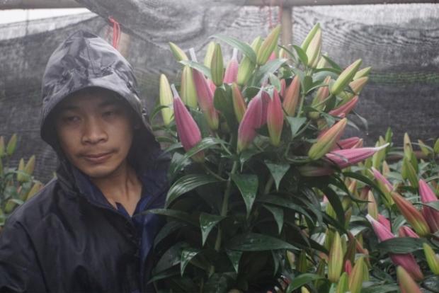 Cắt hoa đem bán mà người dân buồn như muốn khóc.