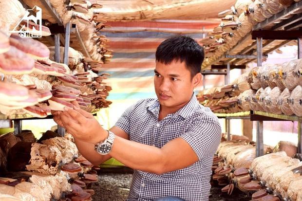 Bùi Minh Thắng bỏ những 3 năm ra nghiên cứu về kỹ thuật trồng nấm.