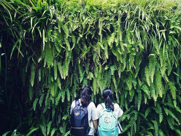 Những mảng tường cây rợp bóng mát - (Instagram: Haru)