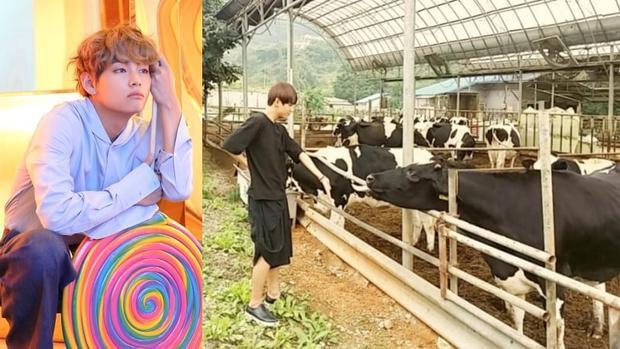 Tin được không, những nam thần này suýt trở thành… nông dân nếu không debut làm idol!