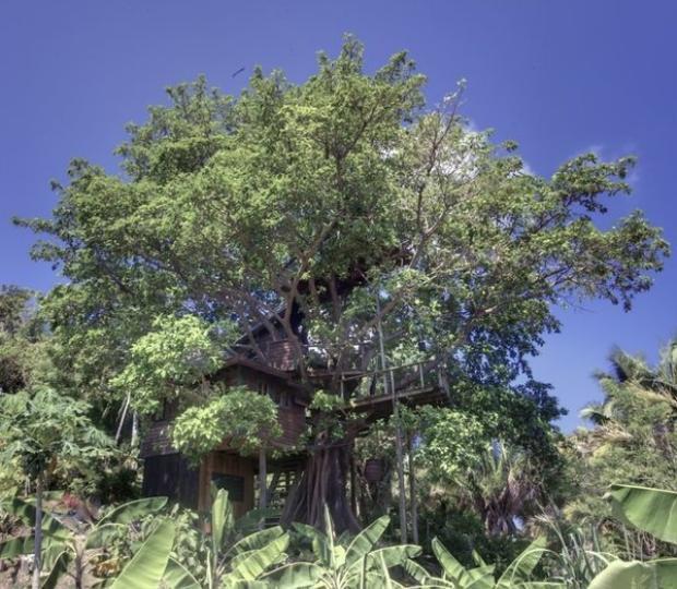 Honduran Fig Tree House (từ 99 USD/đêm): Ngôi nhà 2 tầng tuyệt đẹp này nằm trên ngọn của một cây sung to lớn. Đây là ngôi nhà duy nhất ở Utila (đảo ở Honduras) và có cảnh quan tươi đẹp và tầm nhìn không bị hạn chế. Ngôi nhà bao gồm võng, vòi hoa sen nước nóng ở tầng trệt hoặc vòi hoa sen được thiết kế ở ban công.