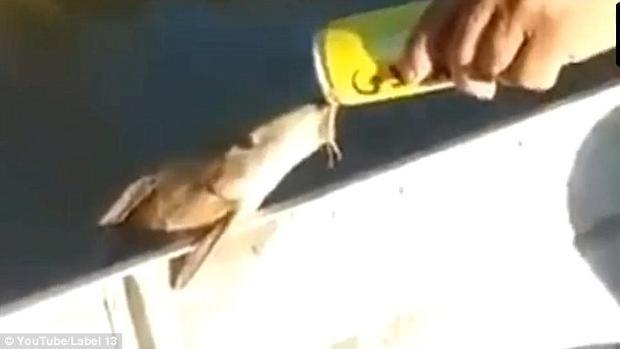 Cá còn dùng vây vịn vào cạnh thuyền để thưởng thức bia. Ảnh: Youtube