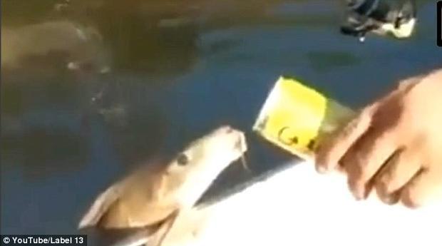 Con cá uống ít nhất 20 ngụm bia. Ảnh: Youtube