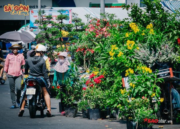 """""""… Chớ cũng tại cái tánh mê hoa kiểng quá, mà nhà thuê trọ lấy đâu đất trồng. Vậy nên đi bán dạo, vừa được ngắm hoa vừa có tiền nuôi con cái"""" - chị cười hì hì."""