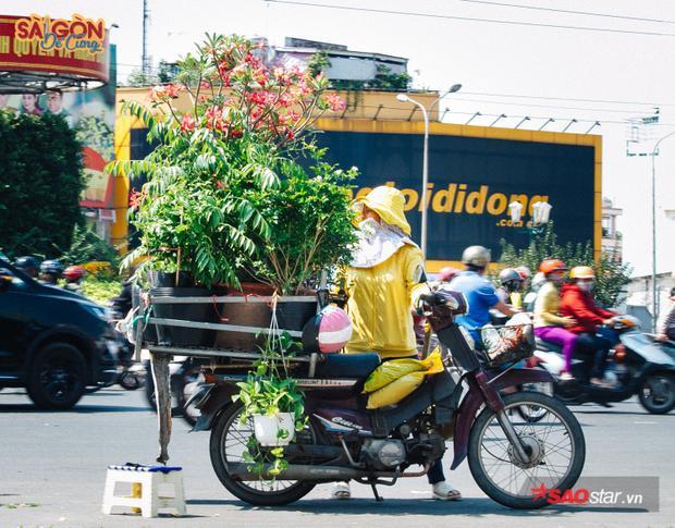 Người Sài Gòn đã dần dà quen với những chiếc xe chở đây hoa kiểng, cây xanh,… lang thang khắp phố phường như thế này.