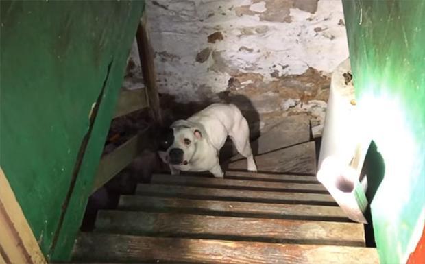 Chú chó đáng thương bị bỏ lại dưới tầng hầm suốt một thời gian dài. Ảnh: Bored Panda
