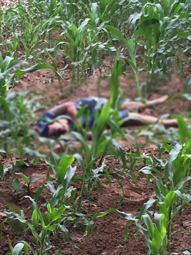 Khu vực ruộng ngô nơi phát hiện thi thể nam thanh niên.