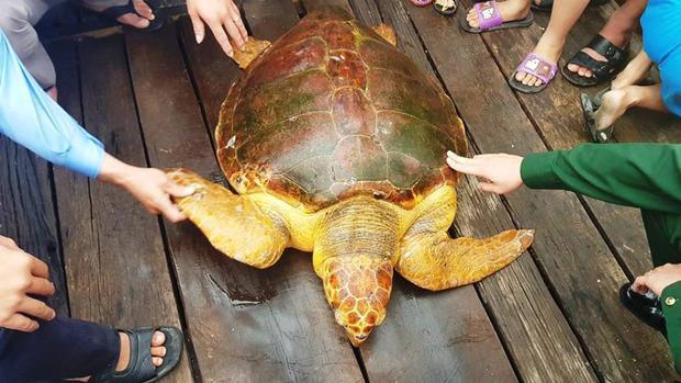 Rùa quý hiếm được cơ quan chức năng và ngư dân thả về biển.