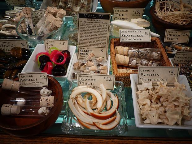 """Các sản phẩm """"độc dị"""" trongEvolution Store: Răng hải cẩu, nọc ong độc, xương trăn. Ảnh:Courtesy Evolution Store"""