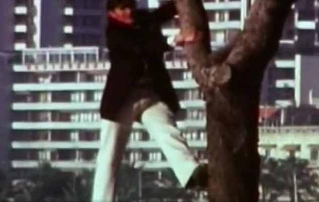 Ông trèo lên cây để tìm lại cánh rừng khi xưa, nhưng mọi thứ đều đã khác trước.