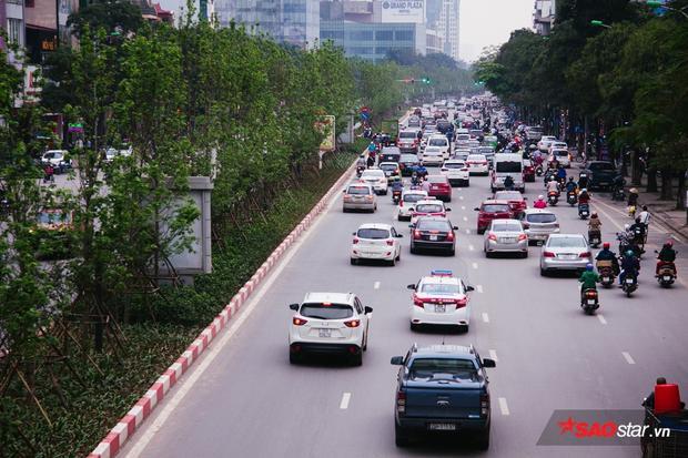 Hàng phong lá đỏ đâm chồi tuyệt đẹp trên đường phố Hà Nội.