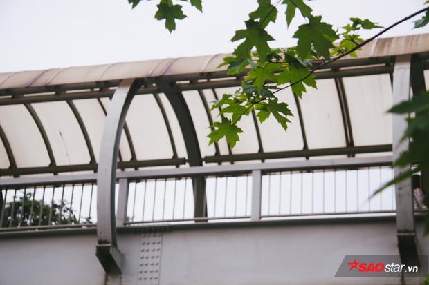 Hà Nội đang thực hiện chương trình trồng một triệu cây xanh đến năm 2020. Thành phố đã trồng được khoảng 500.000 cây. Ngoài cây phong, nhiều loại cây mới khác được đưa vào trồng như sang, hoa ban, chà là, cọ dầu, bàng lá nhỏ, chiêu liêu, long não, giáng hương…