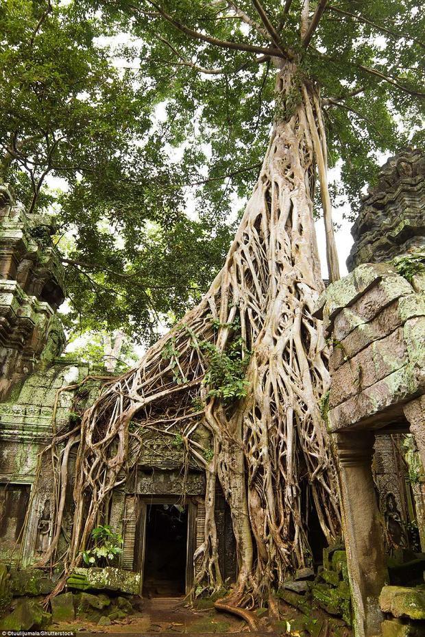 Đền Taprom còn được gọi là Lăng mộ Hoàng hậu, nơi những cây cổ thụ vĩ đại bao phủ nhiều công trình, tạo nên những hình thù cổ quái và hấp dẫn. Một trong những lối vào ngôi đền Angkor Wat nổi tiếng nằm ở Siem Reap, Campuchia với chiều dài hơn 800 m và được bao quanh bởi một hào nước rộng lớn. Ảnh:Shutterstock