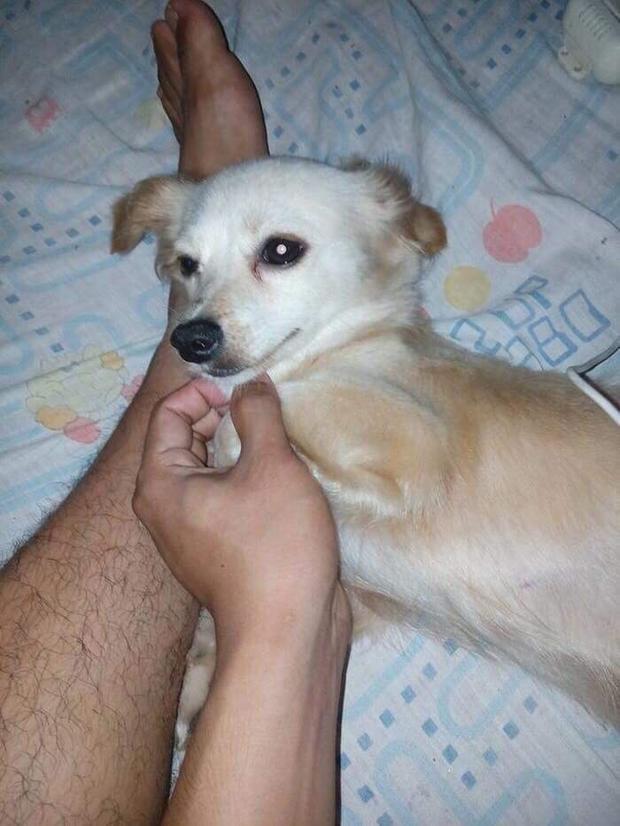Nụ cười cuối cùng của chú chó cùng ánh mắt Em làm tốt chứ cậu chủ? trước khi chết khiến dân mạng xúc động