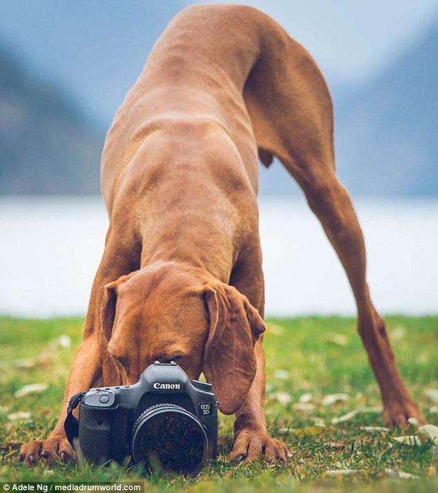 Whiskey cũng rất thích chụp ảnh và giờ đây nó có thể thực hiện được những thao tác bấm máy.