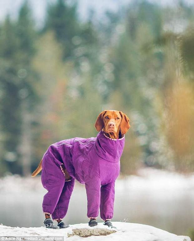 Khi trời lạnh, chú chó sẽ được đeo giày, mặc áo và tiếp tục khám phá thiên nhiên.