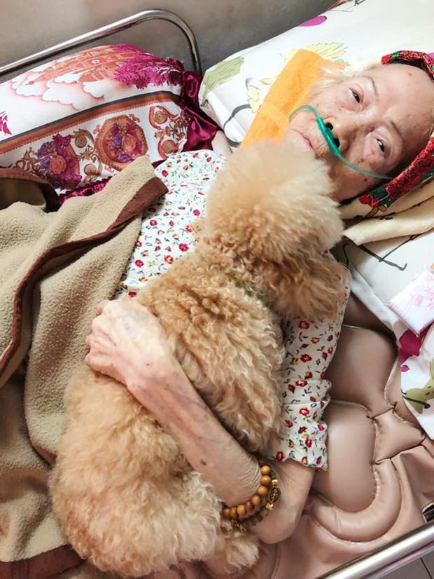 Hình ảnh chú chó cưng trung thành và ân cần bên ngoại khiến nhiều người xúc động.