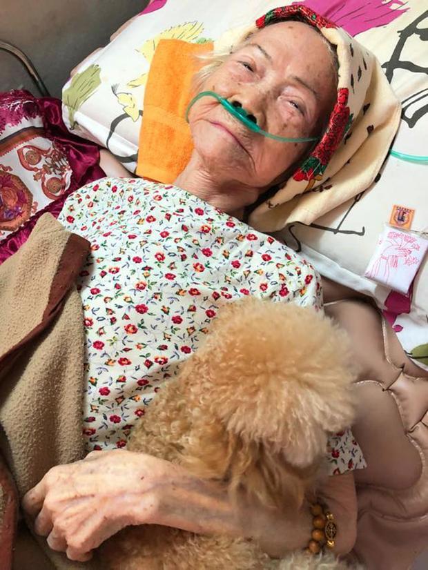 Nghẹn ngào chuyện chú chó rơi nước mắt ngày ngoại nằm giường bệnh, túc trực đến khi ngoại qua đời