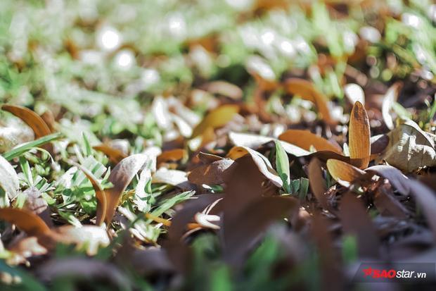 Từ Mạc Đĩnh Chi, Võ Thị Sáu, vòng quanh Hồ Con Rùa, ra tận Nhà thờ Đức Bà, đường dài Nguyễn Thị Minh Khai, có khi về Gò Vấp, Làng Đại Học… Chò có trên nghìn cây, khắp thành phố.