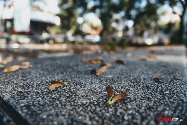 Chò là một loại quả, và việc nhờ gió để gửi quả đi cũng chỉ là cách mà cây phân tán hạt, bắt đầu vòng đời mới của nó.