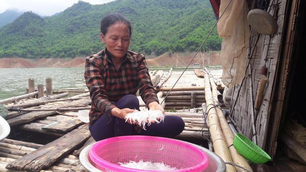 Loại cá ngần này xuất hiện vào một thời điểm duy nhất trong năm trên sông Đà.