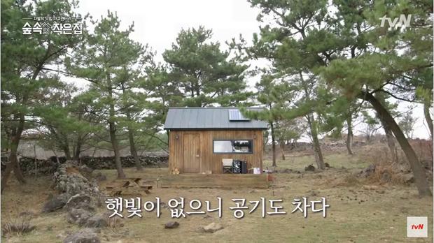 Căn hộ thơ mộng giữa rừng của cô Park.