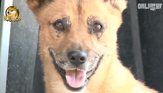 Bị châm lửa đốt, chú chó con này vẫn sống sót một cách kỳ diệu nhờ vào lòng tốt của người xa lạ