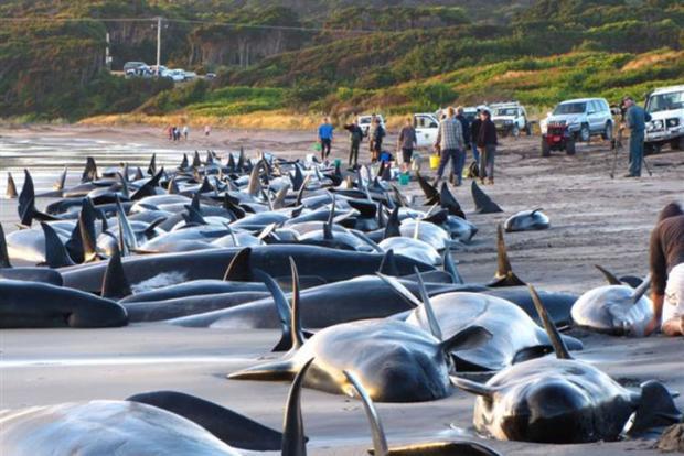Trò chơi bệnh hoạn này lấy ý tưởng từ hành động tự làm mình mắc cạn của những chú cá voi mà đến nay vẫn còn là một ẩn số khoa học chưa giải thích được.