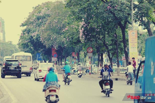 Không rõ hoa bằng lăng xuất hiện tại Hà Nội từ khi nào, chỉ biết chúng bắt đầu quen thuộc với người dân thủ đô trong khoảng vài chục năm gần đây, cùng với nhịp phát triển nhanh của thành phố.