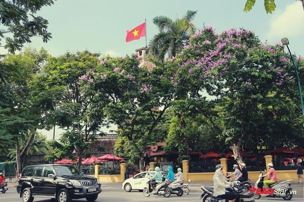 Tuyến đường Điện Biên Phủ lộng lẫy hơn nhờ hoa bằng lăng khoe sắc.
