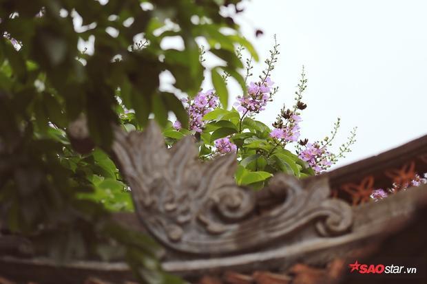 Hoa nở trên mái nhà ở Văn Miếu Quốc Tử Giám
