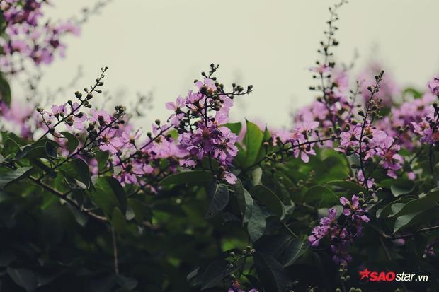 Những chùm hoa hướng thẳng về phía mặt trời.