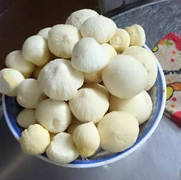 Với nhiều người ở Tây Nam Bộ, mọng dừa là cả một tuổi thơ dữ dội.