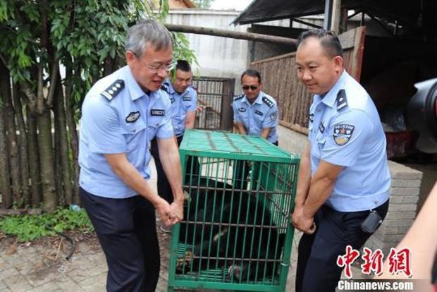 """""""Chú chó"""" thực chất là gấu đen quý hiếm cần được bảo tồn. Ảnh: Chinanews"""