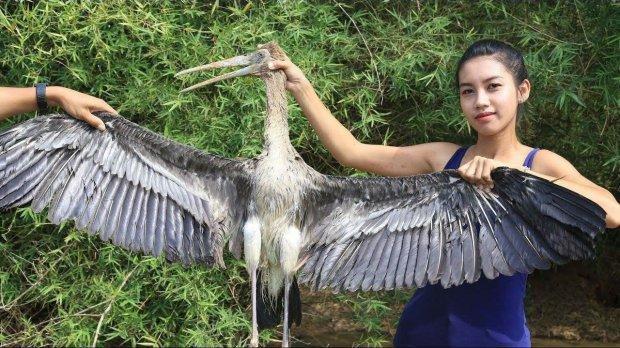 Một loài chim hoang dã khác cũng bị giết thịt.