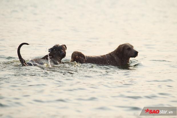 Những chú thú cưng tự do bơi lội giữa hồ.