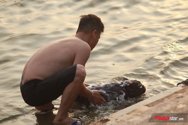 Lúc này, dưới mặt hồ, nhiều chú chó khác đang được chủ nhân xoa xà bông khắp người để tắm cho sạch.