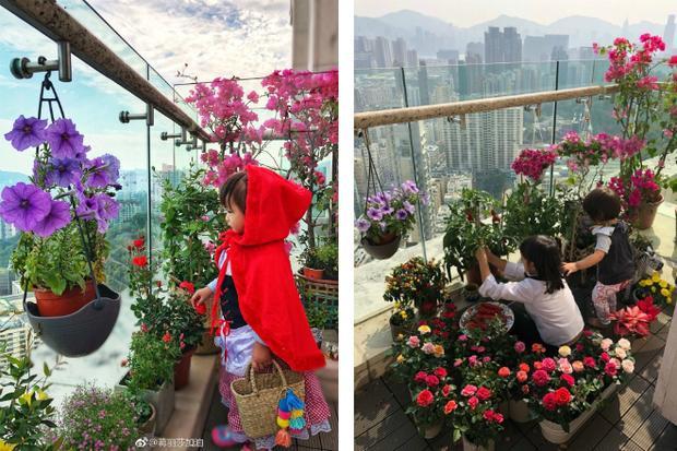Vườnn hoa rực rỡ sắc màu, đa dạng chủng loại của nhà Trần Hạo Dân.