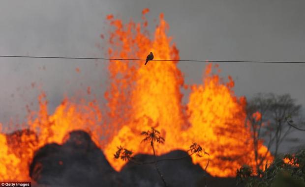 Núi lửa Kilauea, Hawaii đã phun trào từ nhiều khe nứt trong 2 tuần qua, khiến dung nham tràn ra phố, nhấn chìm hàng chục ngôi nhà, khiến hơn 2.000 người phải rời bỏ nhà cửa đi sơ tán. Ảnh Getty Images
