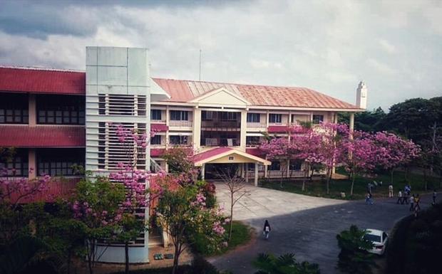 Khuôn viên ĐH Cần Thơ thêm phần lãng mạn bởi sắc hồng bao phủ.