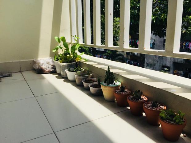 Các bạn sinh viên tận dụng hành lang để trồng cây.